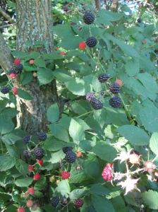 Raspberry Trove