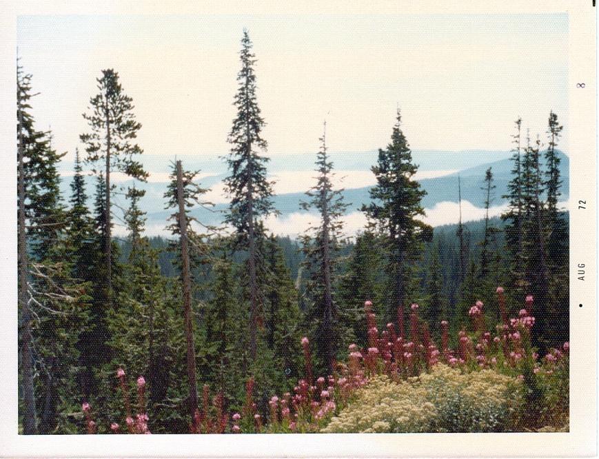 Misty morning in Glacier National Park