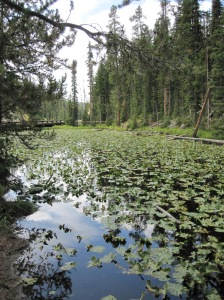 Lily Pads at the Continental Divide?  Is there a frog?