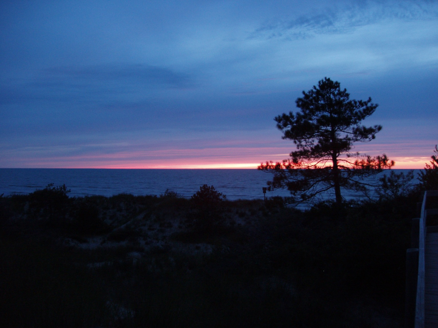 Blue Dusk with Pine Tree