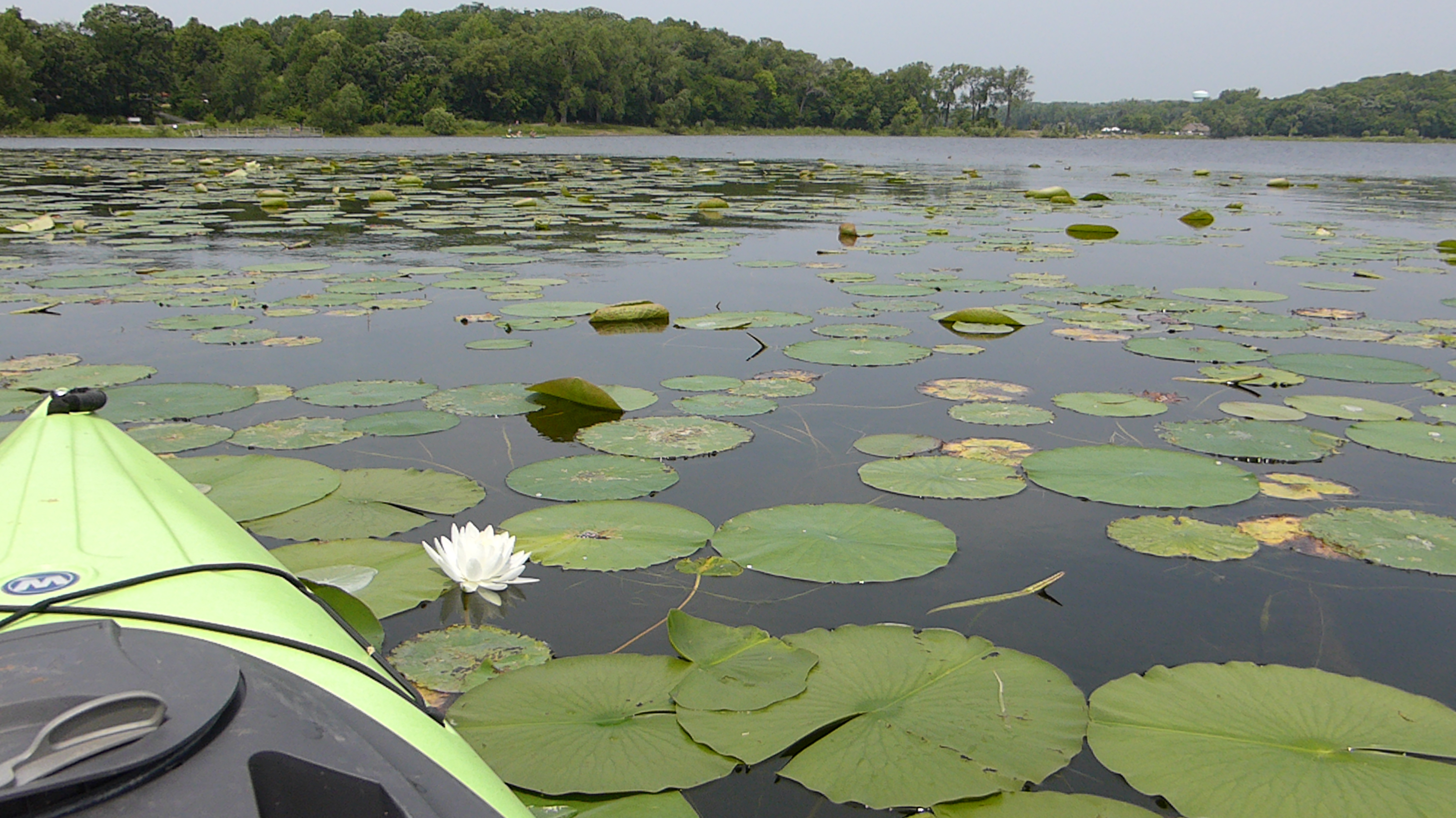 Kayak and lily pads