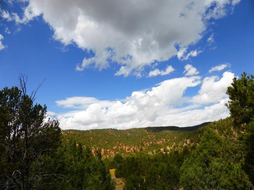 View From Audubon Park