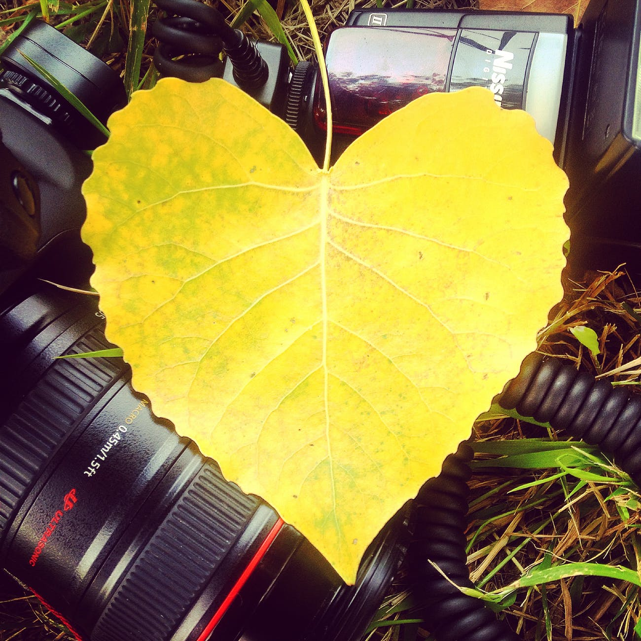 love heart yellow photography
